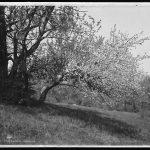 Rétrospective: l'arbre de mariage