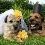 10 vidéos adorables de mariages de chiens et de chiens dans les mariages!