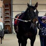 Midwest Therapeutic Riding offre une thérapie aux enfants ayant des besoins spéciaux