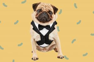 Moi aussi! Adorable tenue de mariage pour animaux de compagnie pour votre ami à fourrure